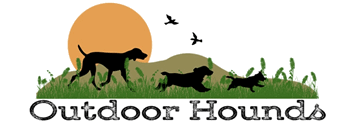 Outdoor Hounds Professional Dog Walking & Pet Services in Brighton & Hove